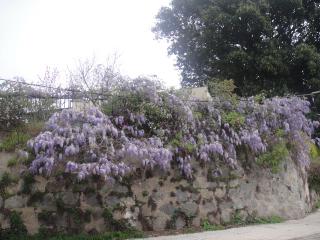 Primavera argentina