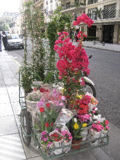 Flores ambulantes