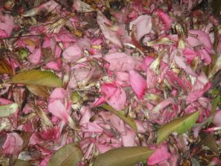 Flores barridas