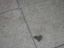 Corazón dominical