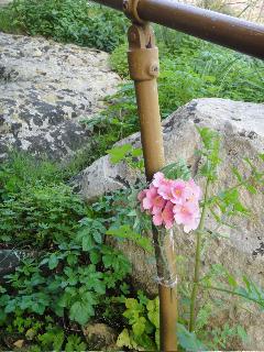 Flor para el alma
