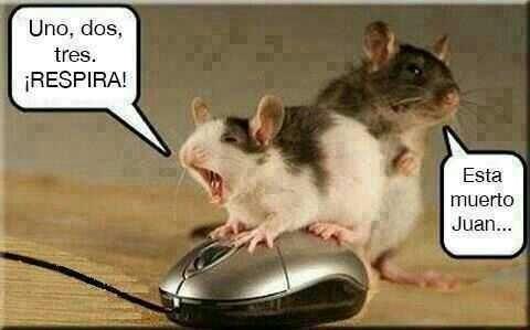 Humor roedor