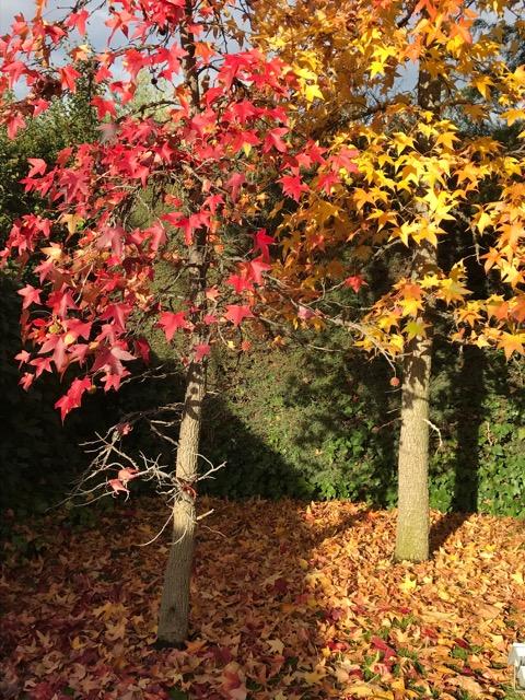 Ya no más hojas